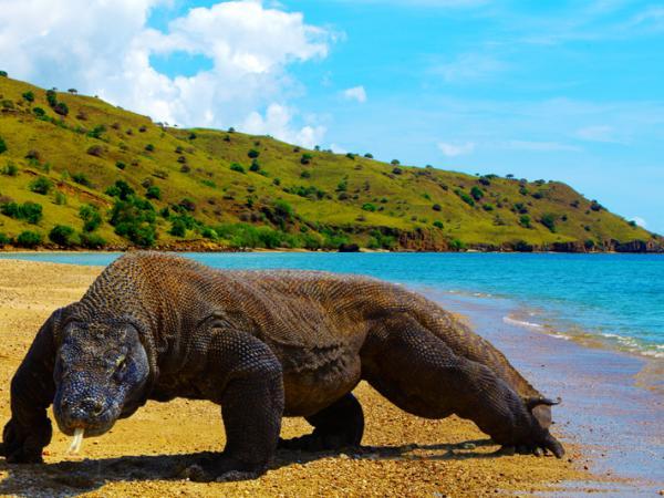 Lihat Komodo di pulau itu kena bayar RM4,000