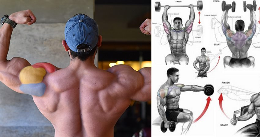 10 Shoulder Workout routines that can Assist You Construct Shoulders Like Boulders