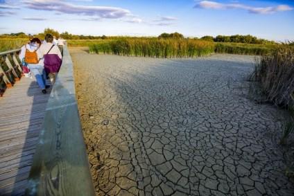 Las Tablas de Daimiel se quedan sin agua | Noticias La Tribuna de ...