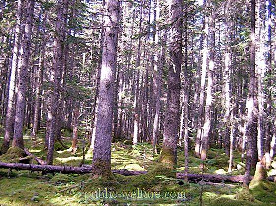 The plants that are suited to live under trees are adapted to live in areas of low light and low water. Ussuri Taiga Plants Animals Features Nature 2021