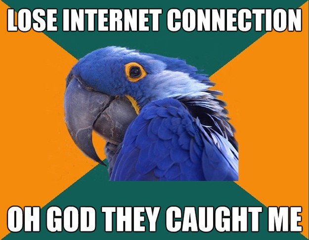 Paranoid Parrot - lose internet connection oh god they cau..