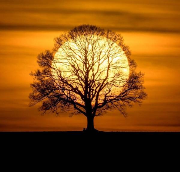 The sun tree : pics