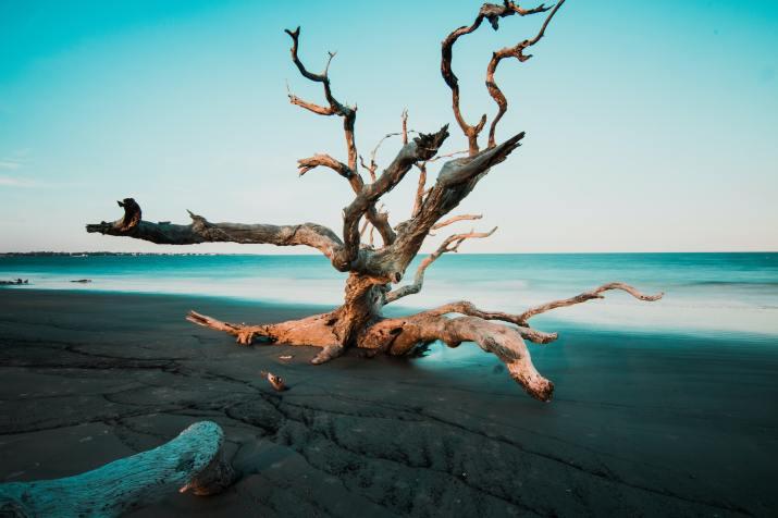 Drift wood (Photo credit to Zach Reiner) [5159 x 3439]