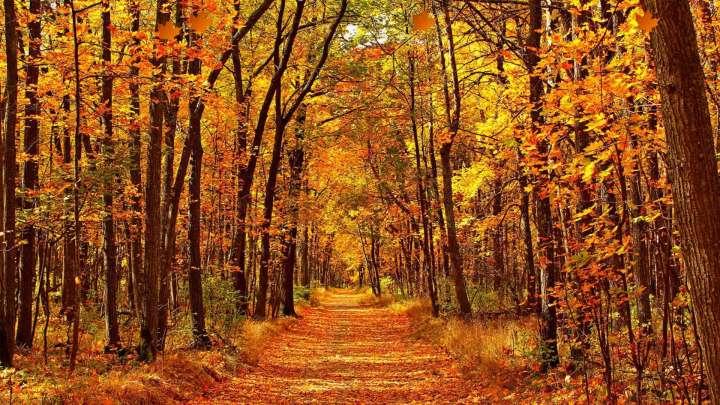 [1920×1080] Autumn forest