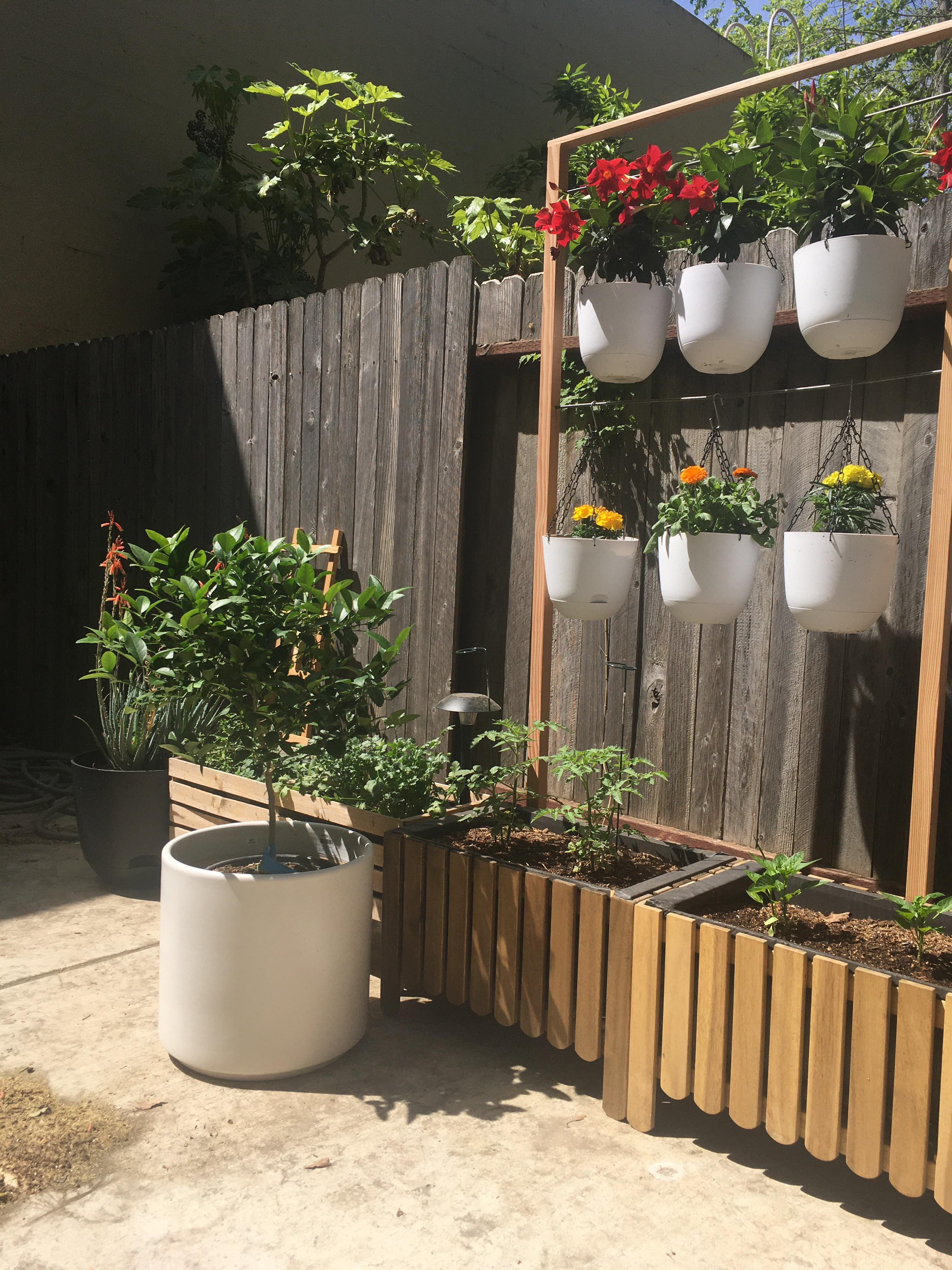 added hanging plants and a lime tree to