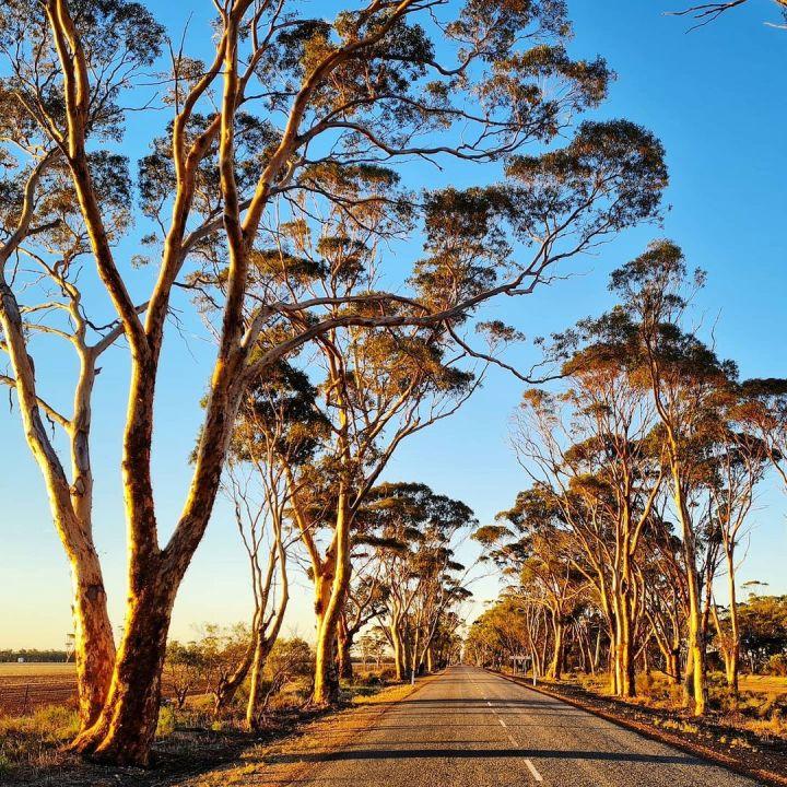 Moora, Western Australia (Photo credit to Rachel Walmsley)