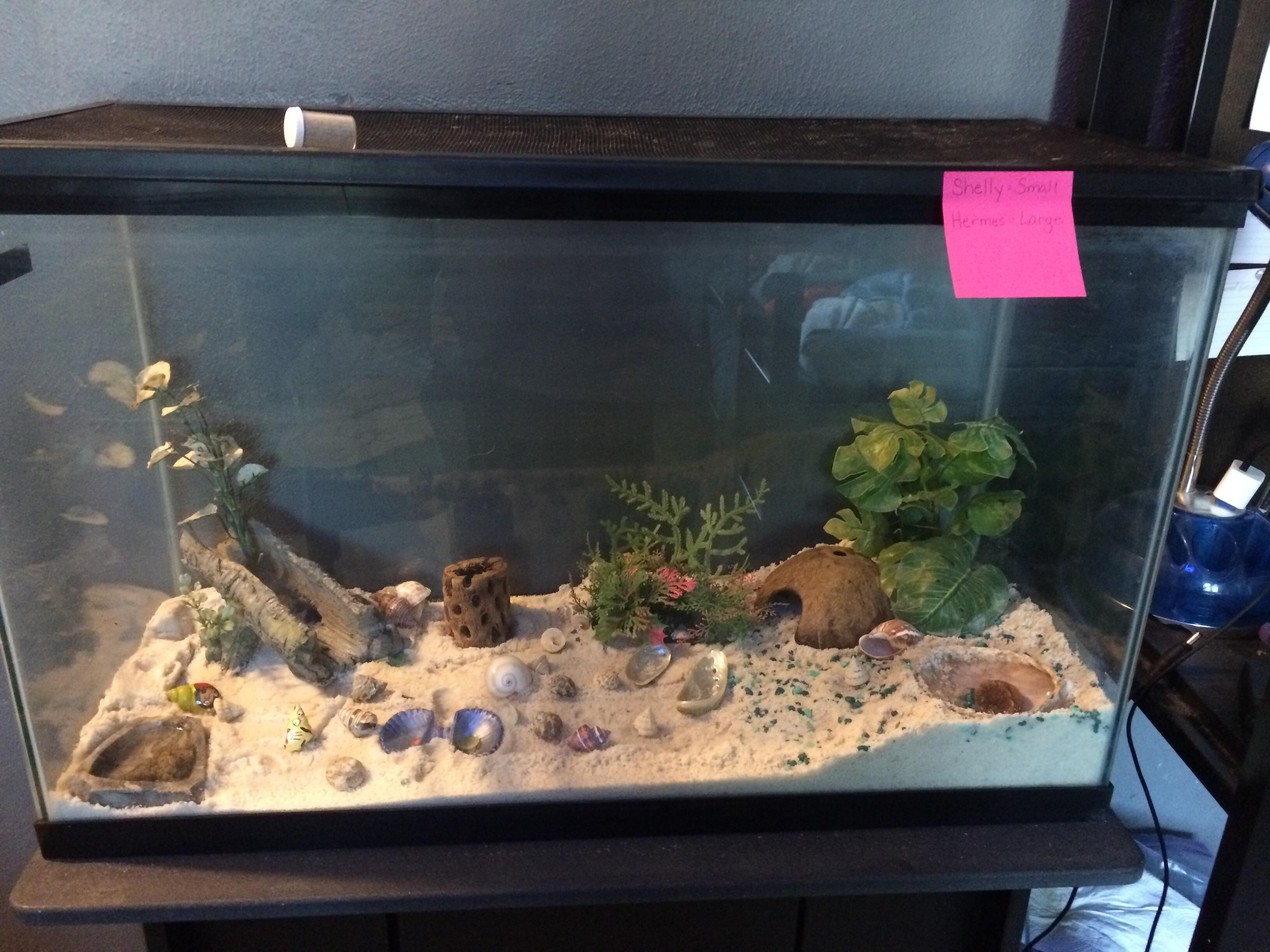 How Is This For A Habitat I Just Got My Hermit