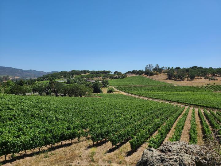 Napa California Winery