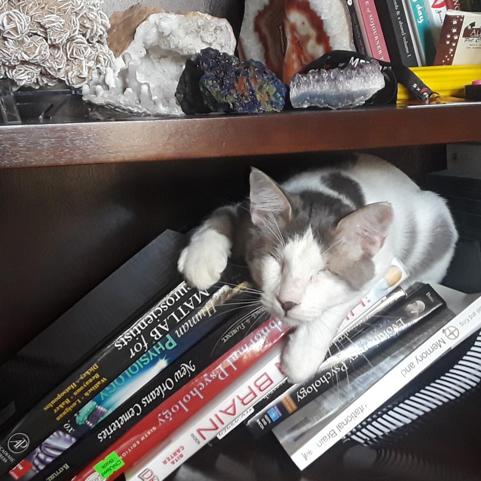 Learning Through Osmosis Cats