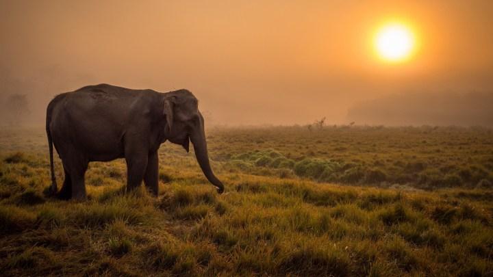 Elephant in the field [2560 x 1440]