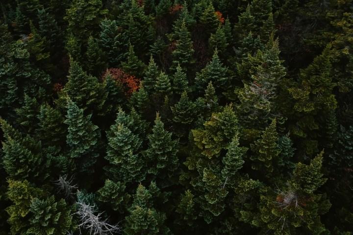 pines [5184×3456]