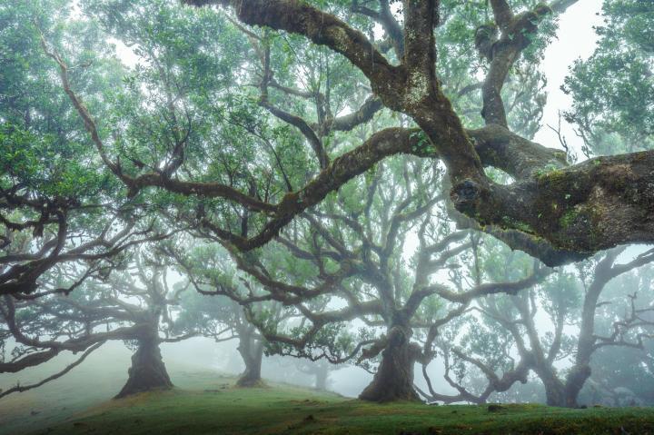 Madeira Island, Portugal (Photo credit to u/cryptodesign) [2000 x 1333]