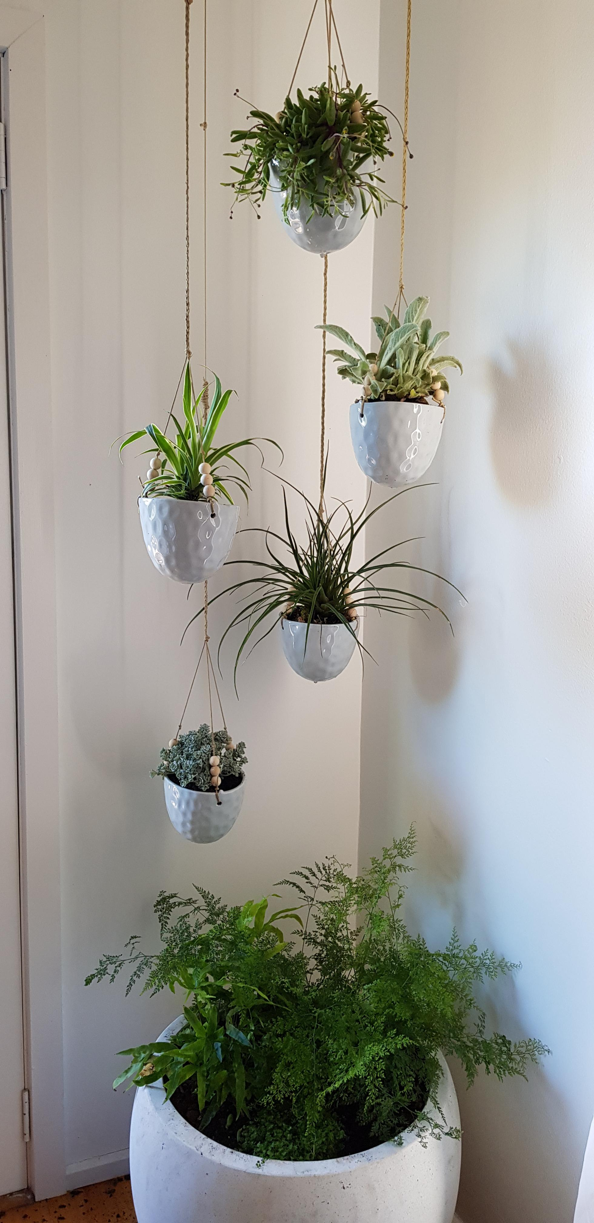 Hanging indoor plants - with a large pot underneath to ... on Hanging Plant Pots Indoor  id=21076