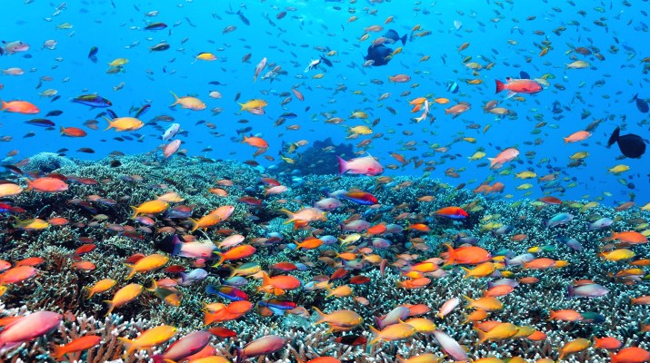 Abundance of fish colours, Great Barrier Reef Australia (Photo credit to @geocappielo) [2126 x 1191]