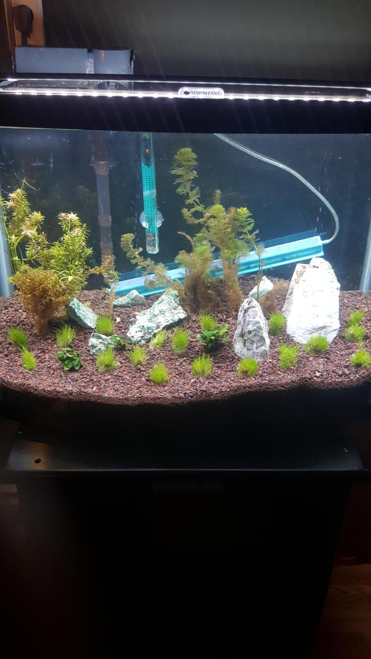 Go easy on me I'm just starting out... : PlantedTank