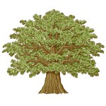 Oak Tree Illustration Drawn With A Fine Liner Pen Then Traced And Coloured In Illustrator With Hindsight The Tree Is A Bit Gingery I Had It With More Green In The Trunk