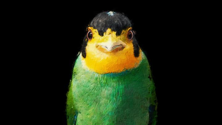 Birdie [3840×2160]