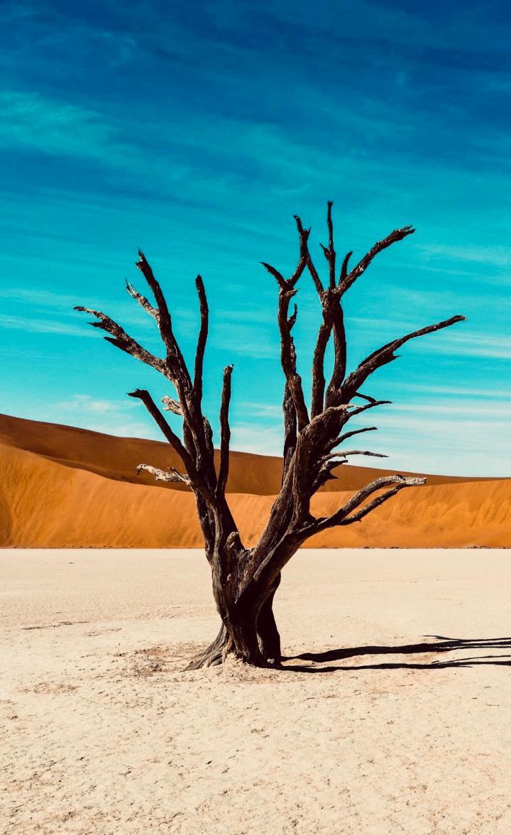 Wallpaper- Desert