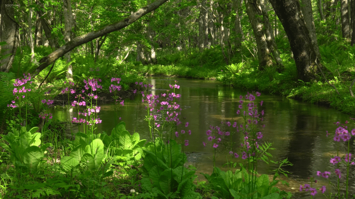 [1920×1080] Forest stream and flowers