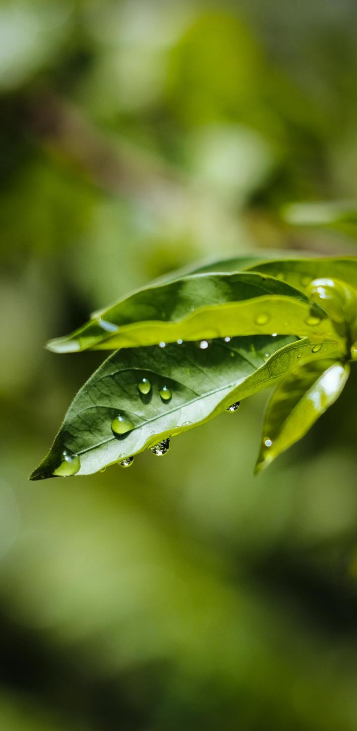Just some leaves with raindrops
