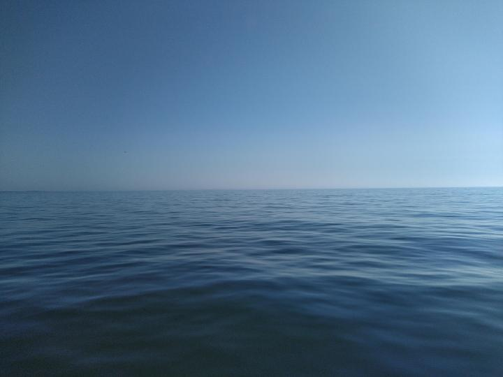 This amazing sea wile i was sailing