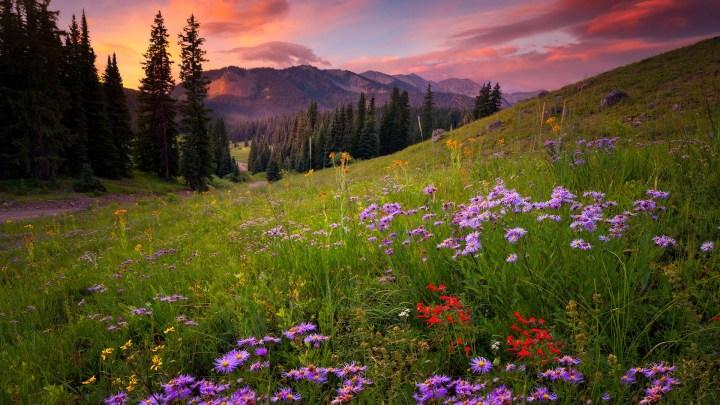 [1920×1080] Field of Flowers