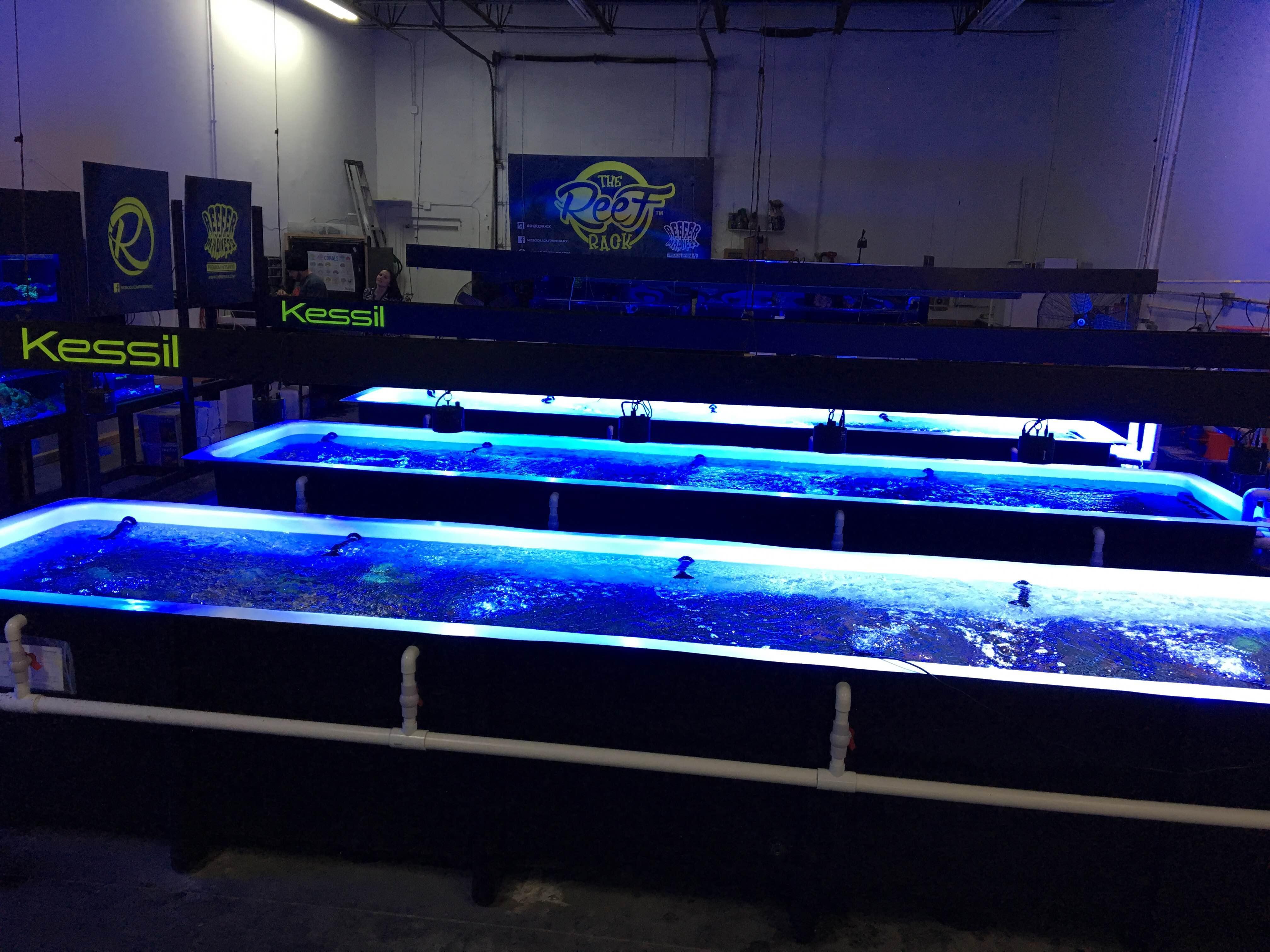 reef rack lenexa ks reeftank