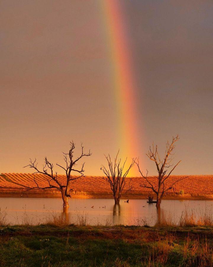 Rainbow at Rutherglen, Victoria Australia (Photo credit to @kate.hanton)