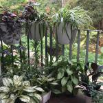 I Really Love My Container Garden I M Lucky Enough To Be Able To Grow Common Indoor Plants Outdoor Year Round Gardening
