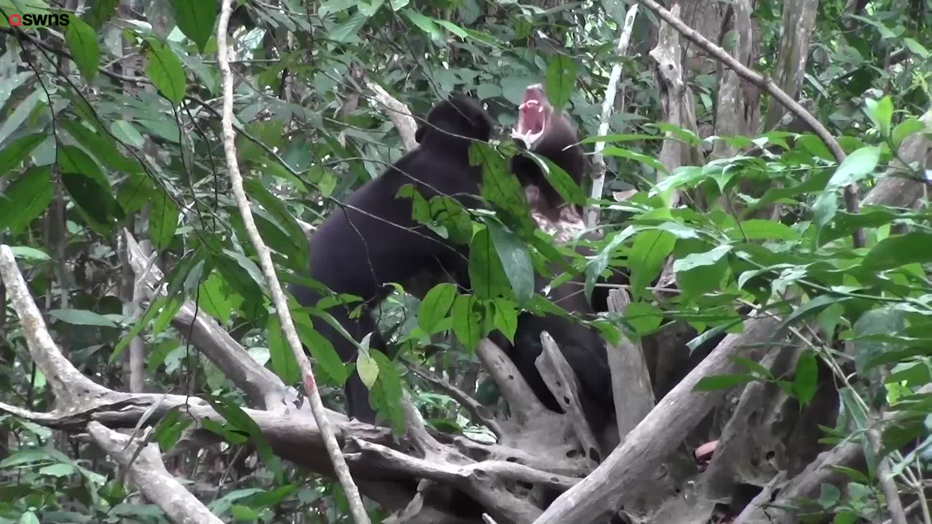 Bears Communicate By Mimicking Each Other S Facial Expressions