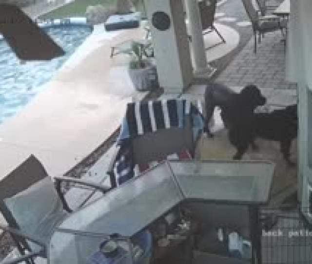 Dog Jumps In Pool To Save His Friend
