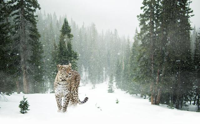 Animal Totem et Animal de Pouvoir Persia10