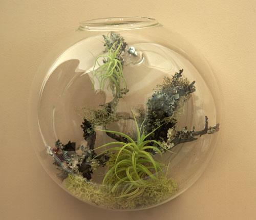 Tiny Hanging Plants