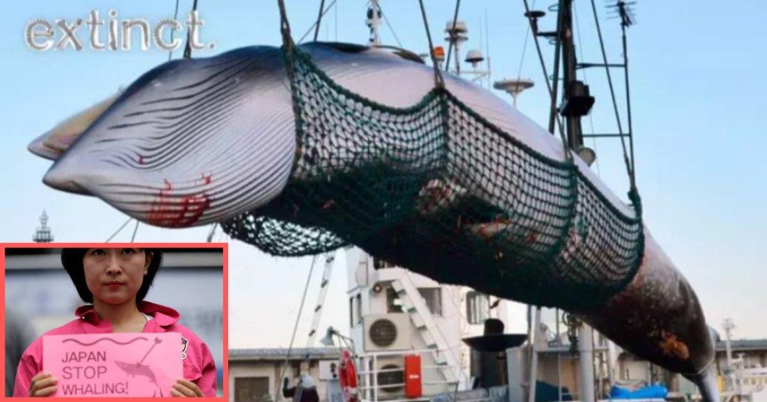 s6 1.png?resize=1200,630 - Le Japon reprend la chasse à la baleine malgré les protestations