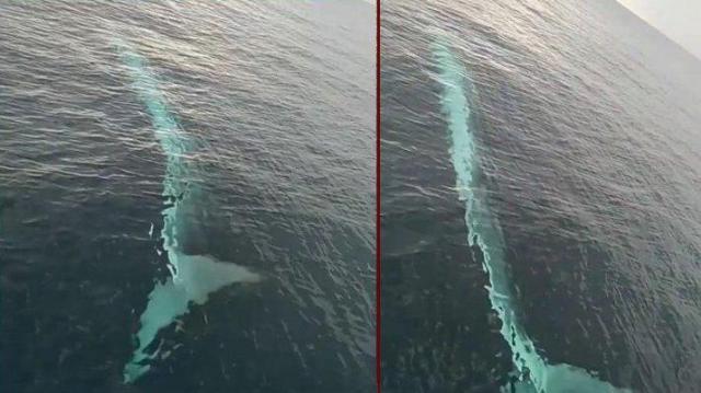 Adana'da görülen balina ile ilgili uzmandan açıklama geldi