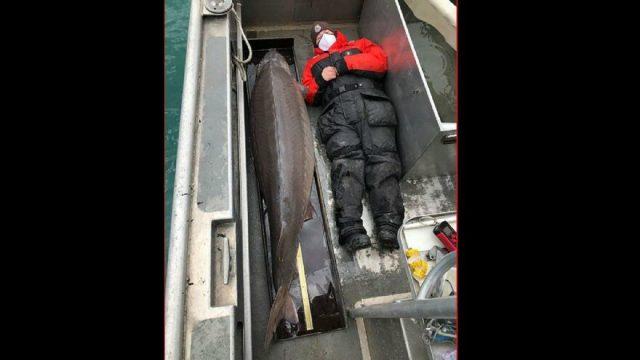 ABD'de asırlık dev mersin balığı yakalandı