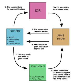 How do iOS Push Notifications work?  Stack Overflow