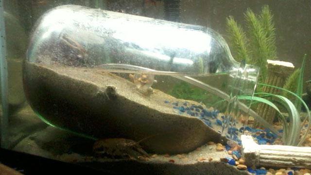 Underwater Dry Zone For Planted Aquarium Pets Stack Exchange