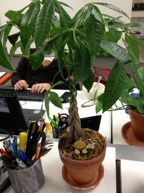 Houseplants Is It Time To Repot My Desk Plant