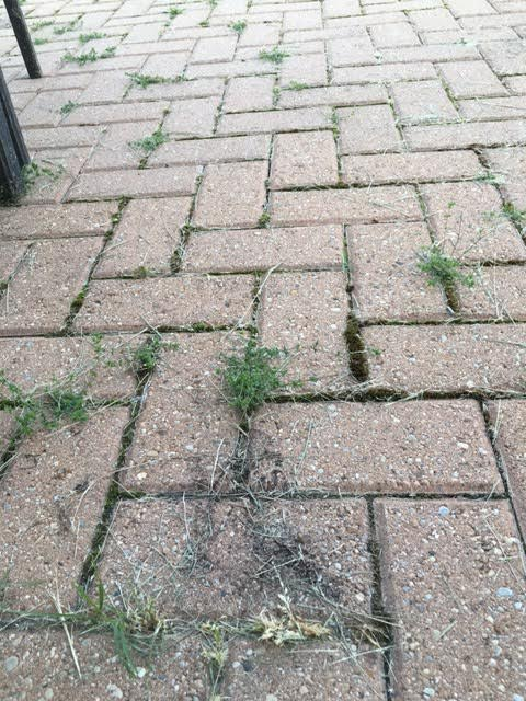 moss from brick patio