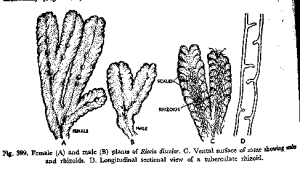 botany  Using anatomical terms for human ans and parts