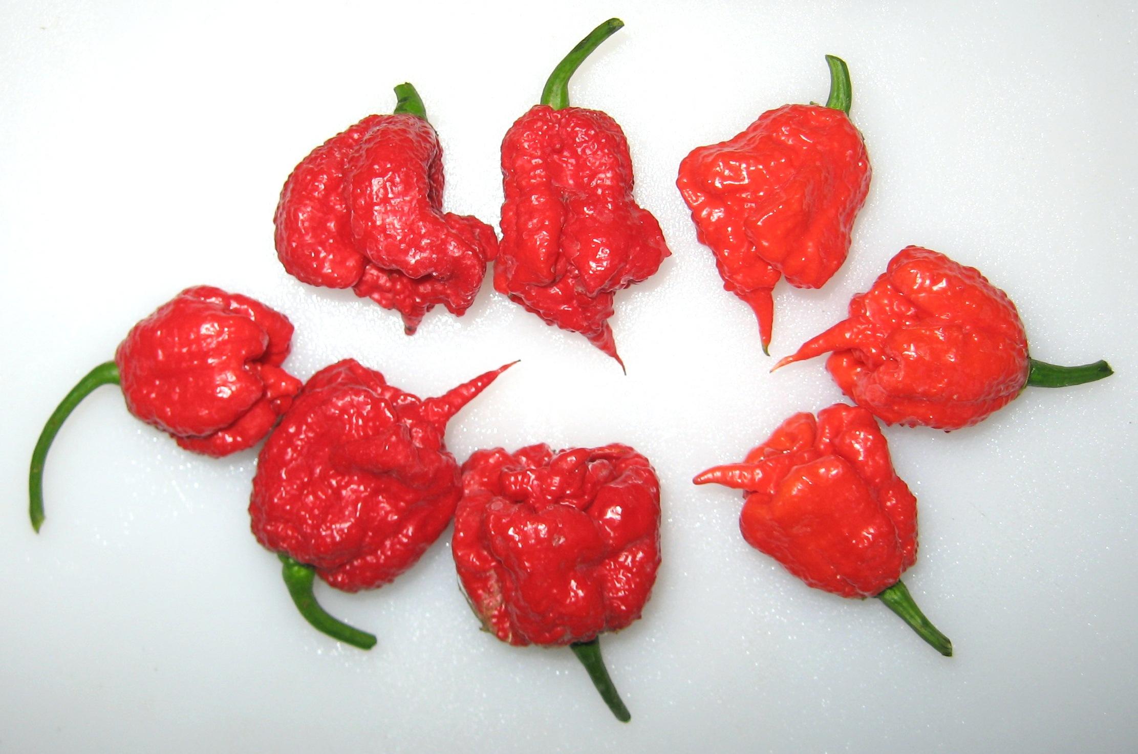 Carolina Reaper biberleri.  Görüntü, tomatoes.wordpress.com delectation izniyle