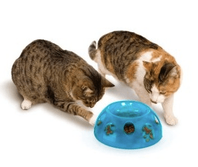 Image result for cats sharing food bowl