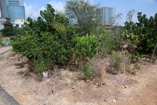 Home / india news / 200 urban forests to be developed in 5 years legal researchers said there should be clarity on the policy and which areas will be earmarked for the development of urban forests. Urban Forestry Project To Be Launched Within A Month