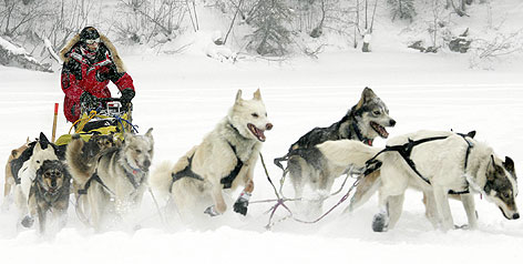 https://i1.wp.com/i.usatoday.net/sports/_photos/2008/02/28/iditarod-med.jpg