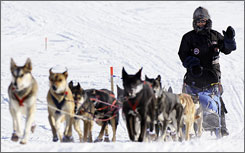 Lance Mackey drives his sled dog team near Golovin, Alaska on Tuesday. Mackey crossed the finish line in Nome on Wednesday to win his third straight race.