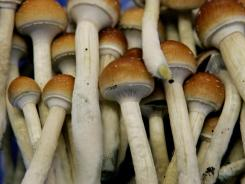 Magic mushrooms are seen at the Procare farm in Hazerswoude, central Netherlands. A study published last year found that people with anxiety who received a single psilocybin treatment had lower depression scores six months later.