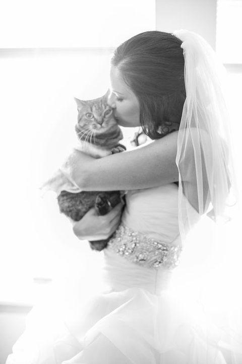 bride kissing her cat