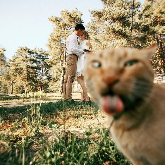 you may include your pet into your wedding like that, too, this is really hilarious