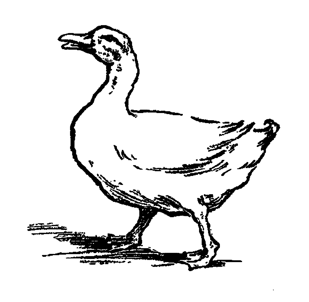 Drawing Duck Design
